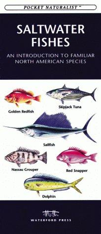 Saltwater Fishes of North America by Raymond Leung
